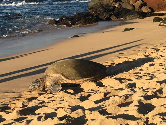 Makawao, Hawái: photo3.jpg