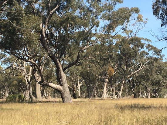 Barrabool State Forest