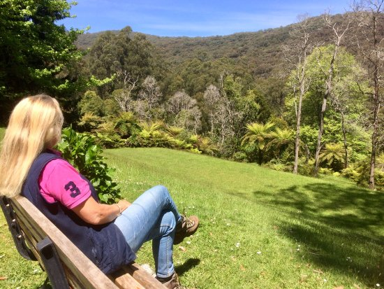 Mount Dandenong, Avustralya: My happy place
