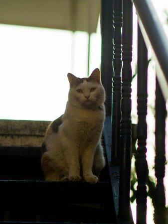 Namsan Guesthouse 2 : Cutie kittycat of Namsan guest house. Was not able to take a picture of the other kitty.