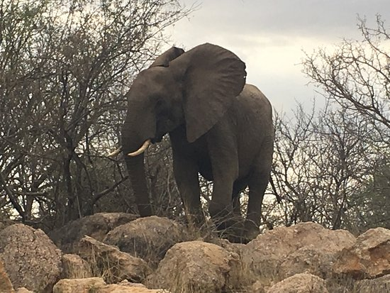 Balule Nature Reserve, Republika Południowej Afryki: photo4.jpg