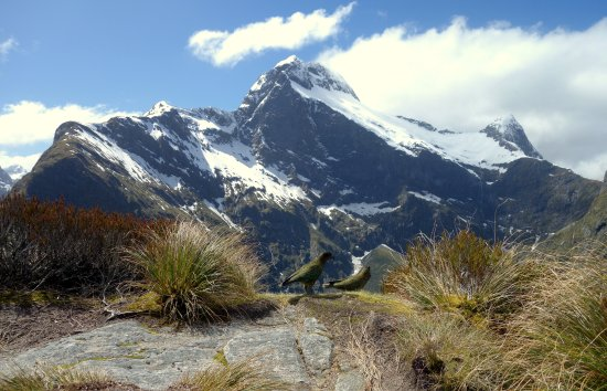 Milford Track: View from the pass with Keas