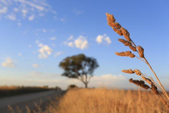 Bathurst, Australia: country roads at sunset NSW