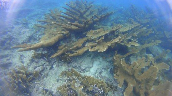 Savaneta, Aruba: IMG-20171107-WA0021_large.jpg