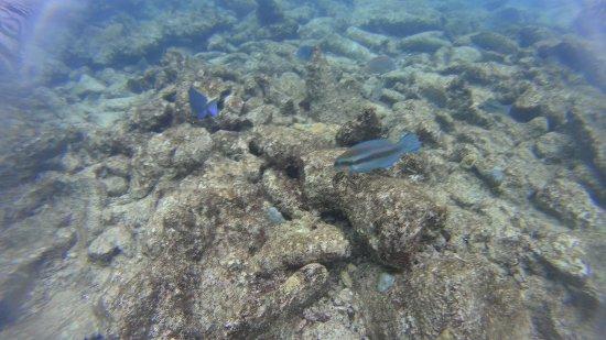 Savaneta, Aruba: IMG-20171107-WA0010_large.jpg