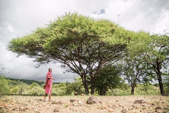 Lake Manyara National Park, Tanzania: Walk in the footsteps of the Maasai - learn the real story of our Maasai neighbors