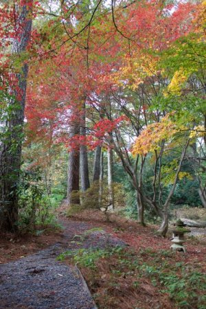 Smith Gilbert Gardens: Beautiful fall color along the path