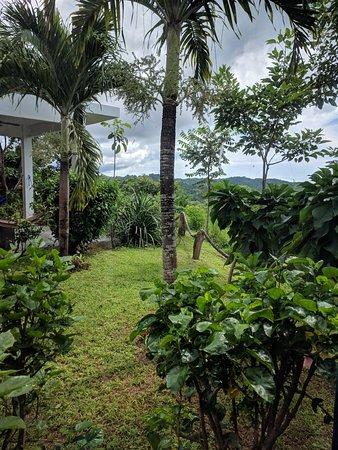 Playa Venao, Panama: IMG_20171106_101744_large.jpg