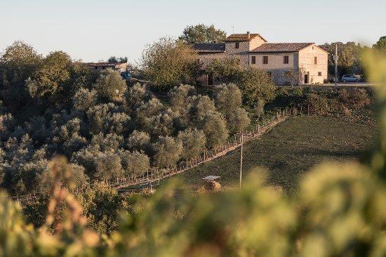 Monteroni d'Arbia, Italien: veduta dell azienda e uliveto