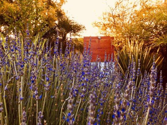 Landscape - Picture of Pictures Guest House, Oudtshoorn - Tripadvisor