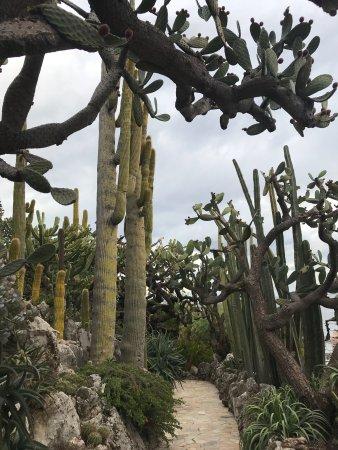 Exotic Garden (Jardin Exotique) : photo5.jpg