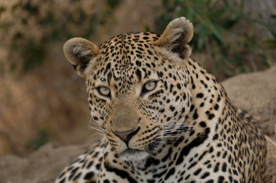 Leopard Hills Private Game Reserve Resmi
