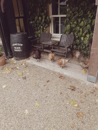 Macreddin Village, Ιρλανδία: some chickens outside Acton's Pub