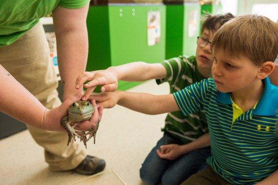 Bonaventure, Canadá: Pavillon amphibiens et reptiles