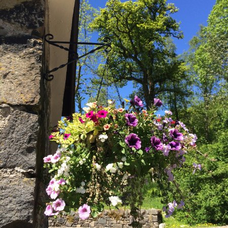 Callander, UK: Garden Cottage Hanging Basket