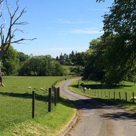 Callander, UK: Driveway