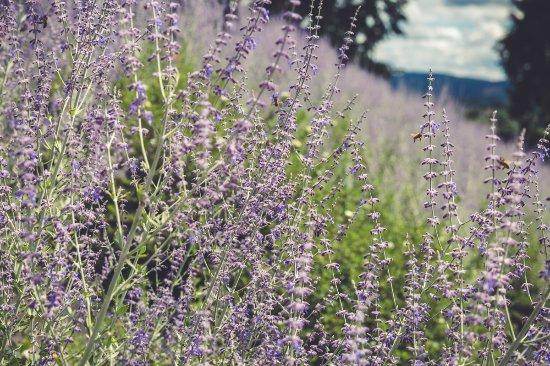 Curbigny, فرنسا: dans les jardins