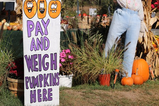 Lapeer, MI: Our pumpkins are priced by weight.