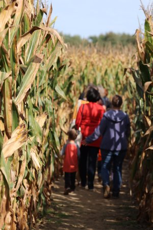 Lapeer, MI: The entrance to our awesome corn maze