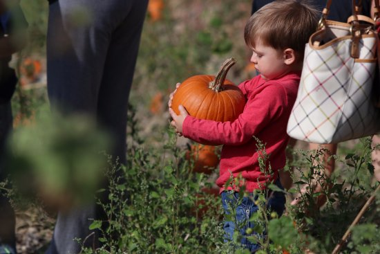 Lapeer, MI: Picking out that perfect pumpkin!