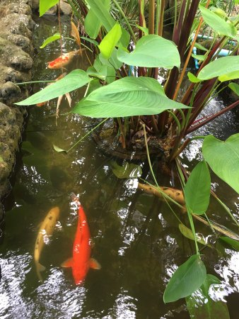 Floraville Phuket Resort: photo5.jpg