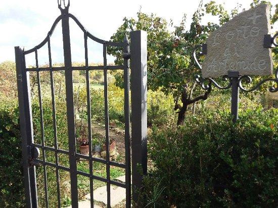 Molino del Piano, Italia: Artemide