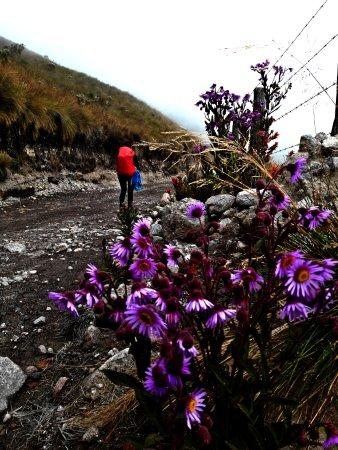 Risaralda, Kolumbien: Sendero Laguna del Otún