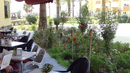 La Dama Algarrobo Costa en el jardin de rosas.