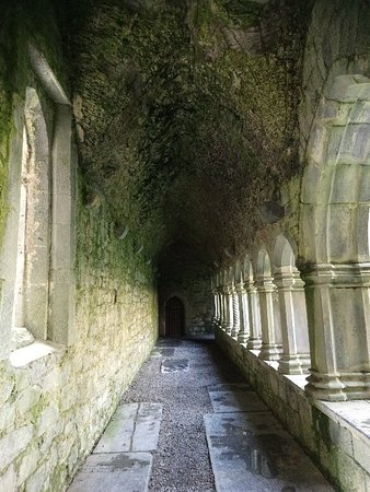 Quin, Ирландия: DSC_1583_large.jpg