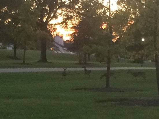 The Historic Powhatan Resort: Deer at Dusk