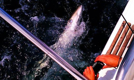 Scituate, Массачусетс: Sharken