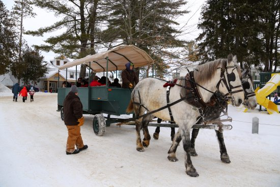 Severn Bridge, Canada: Horse drawn Wagon Rides