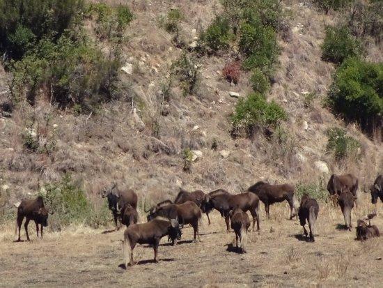 Bokpoort Cowboy Ranch: Local animals...