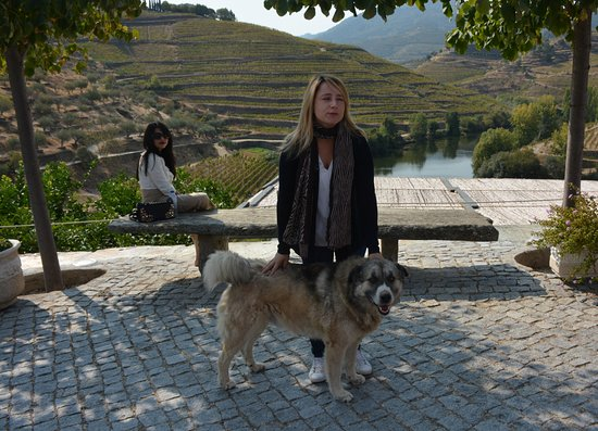 Folgosa, Portugal: our tour guide