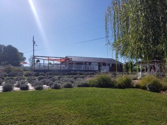 White Oak Lavender Farm: 20171017_143101_large.jpg