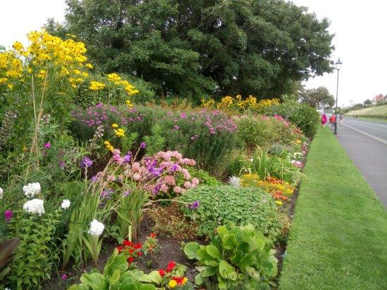 Rotten Row: plenty of flowers