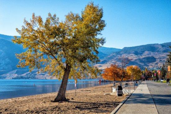 เพนทิกตัน, แคนาดา: Fall colours at Skaha Lake Park while walking along the path.