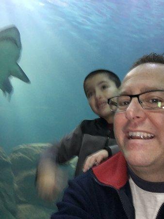 Adventure Aquarium Camden Nj Top Tips Before You Go