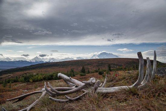 Kantishna Roadhouse: Denali with caribou antlers