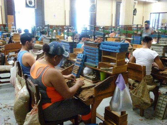cuba cigar factory tour,
