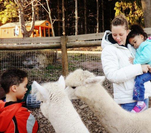 Dushore, PA: Feeding the 'Pacas