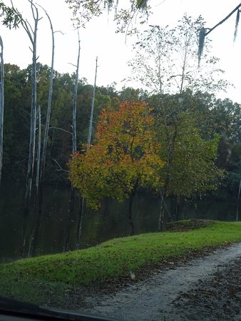 Millbrook, AL: Beautiful island, the fall trees are amazing to look at