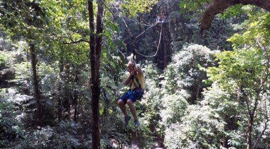 Cape Tribulation, Australia: Jungle Surfing Canopy Tours