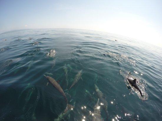 Omar's sportfishing: photo1.jpg