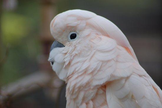Chelmsford, UK: bird