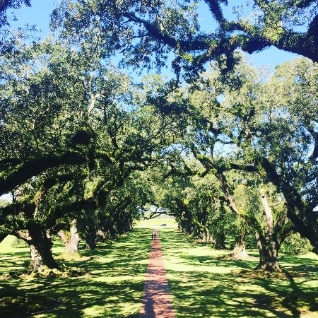 Vacherie, LA: The large oak trees that line the entrance to the house. Where the plantation gets it's name fro