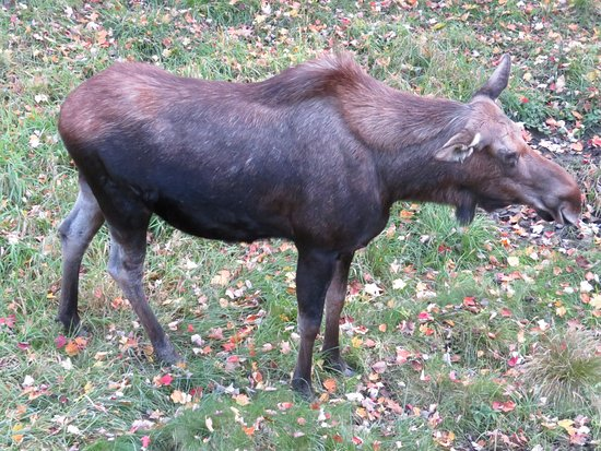 NEW Zoo & Adventure Park: Moose