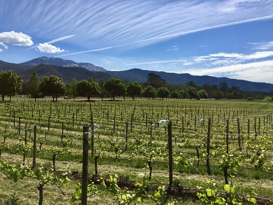 Porepunkah, Australia: Vines with a mountain view