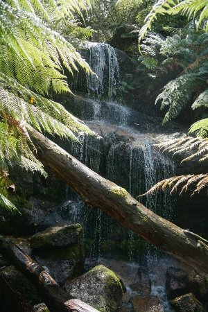 Ferntree Falls Photo