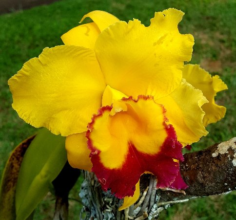 Kilauea, ฮาวาย: 20171109_162116_large.jpg